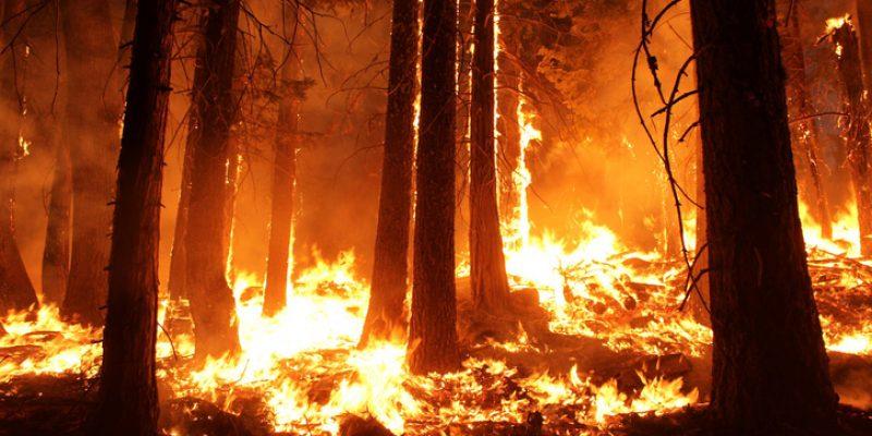 Mexicanos crean red de sensores para alertar de incendios forestales