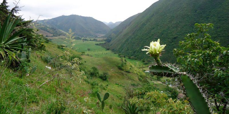 Aumentó 71.8% del territorio nacional protegido por normas ambientales