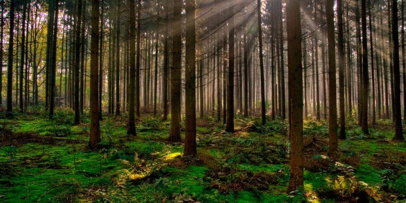 México recuperó su vocación forestal en este sexenio Semarnat